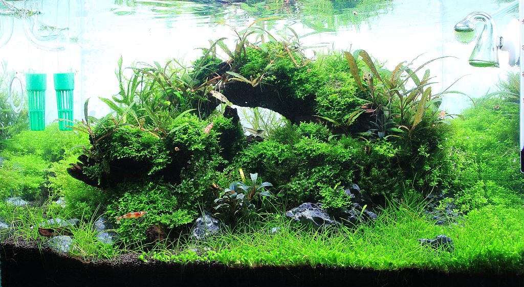 Aquascape.jpg